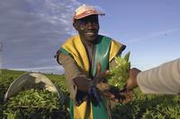 Unilever: Nachhaltige Marken wachsen schneller