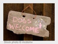showimage Die perfekten vier Wänden für einen Urlaub mit Hund