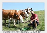 Wie der Bauer seine Kuh überlebt