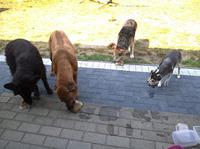 Das JoJo-Wetter macht auch Tiere verrückt
