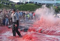 AIDA und HapagLoyd stoppen wegen Walfang Anlandungen auf Färöer-Inseln - WDSF ruft gegenüber TUI Cruises zum Boykott auf