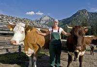 Molkerei Berchtesgadener Land geht Sonderweg bei Milchpreis