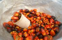 Verzicht auf Produkte mit Palmöl keine Lösung