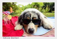 Immer cool bleiben ohne Hecheln - für Hunde und ihre Menschen