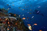 """Weltgrößtes 360°-Panorama in Leipzig - Yadegar Asisi zeigt einzigartige Unterwasserwelt """"Great Barrier Reef"""""""