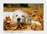 Herbstbeginn: Schnell noch mal weg auf vier Pfoten