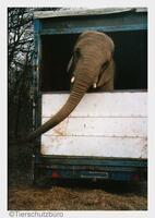 Welttierschutztag: Wildtierverbot in Zirkussen muss kommen