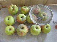 Einlagern von Obst und Gemüse mit Effektiven Mikroorganismen