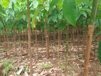 TIMBERFARM - Jungpflanzenproduktion ab 2016 im eigenen Haus