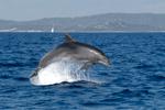Erfolg gegen Offshore-Ölförderung in der Adria!