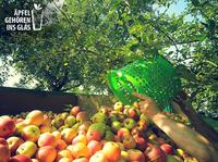 """""""Äpfel gehören ins Glas!"""" Bei den hessischen Kelterern laufen die Apfelpressen auf Hochtouren"""