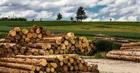 Das Multitalent Holz erlebt eine Renaissance