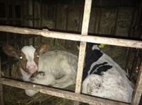 Deutsches Tierschutzbüro deckt schweren Fall von Tierquälerei auf