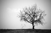 Trauer - Wie ist der Verlust eines geliebten Menschen nur zu verkraften?
