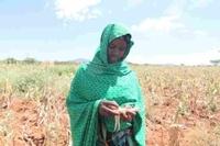 Äthiopien droht schlimmste Dürre seit 30 Jahren