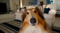 Neue Maßstäbe bei Geruchsneutralisierer für Mensch und Tier!