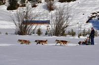 Alaska-Feeling im Tiroler PillerseeTal