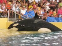 SeaWorlds new reported restrictions on the Orca show is a weak compromise