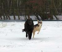 Hunde brauchen Schutz während der  dunklen Jahreszeit
