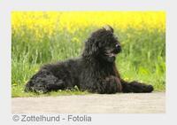 Haustiere für Allergiker? Tierarzt aus Heilbronn klärt auf