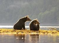 """""""Bärenstarker Urlaub"""": Auf Tuchfühlung mit Grizzly & Co."""