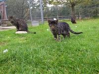 BDT begrüßt Initiative der Bundesregierung zur Kastrationspflicht von Katzen