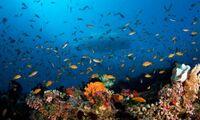Das Baa Atoll der Malediven - ein weltweit einzigartiges Ökosystem