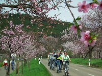 Pfalz für  Einsteiger  und  Fortgeschrittene