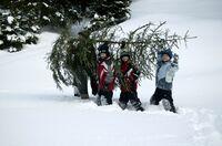 Naturschutz auf weihnachtlich