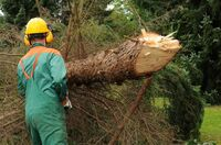 Bundeskartellamt gegen gebündelte Forstwirtschaft