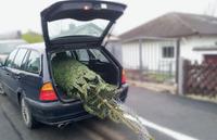 R+V24: Unfallfreie Fahrt, unbeschwertes Fest - so bringen Sie den Weihnachtsbaum sicher nach Hause