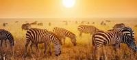 Maßgeschneiderte Safari-Abenteuer mit Enchanting Travels: