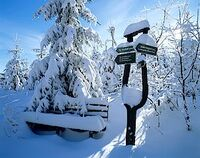 Skilanglauf im Thüringer Wald