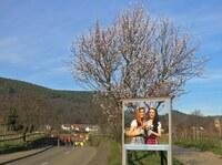 Tipp: Weiß, rosa Neujahrstag an  der Deutschen Weinstraße