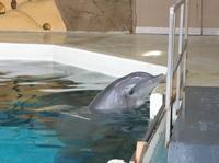 Duisburger Delfinbaby gestorben - WDSF spricht von mangelnder Fürsorgepflicht und fordert Einschreiten der Aufsichtsbehörden