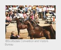 In Scottsdale fühlen sich Pferde und Pferdeliebhaber pudelwohl