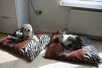 Gefahren der Erkältungszeit für Haustiere
