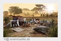 Wildlife-Safari bei Erwin Müller
