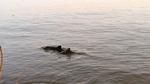 Schweinswalen auf der Spur: Sichtungen bitte melden!