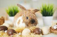 Gute Nachricht zu Ostern