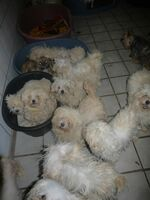 Mehr als 100 beschlagnahmte  Hunde im BDT-Tierheim aufgenommen