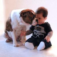 Alternative Bulldoggen: Europas große Hundeausstellung für Bulldoggen in Lübbecke
