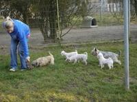 Welle der Hilfsbereitschaft für beschlagnahmte Hunde