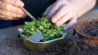 Start in die Gartensaison: So ist der Erfolg sicher!