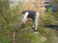 Infektionsgefahr: Zecken lauern auch im eigenen Garten