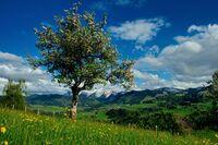 showimage Was macht den Frühling im Allgäu so besonders?