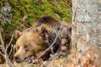 showimage Tapsiges Duo im Nationalpark Bayerischer Wald