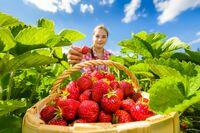 Erdbeeren: Überraschend kombiniert, zum Dahinschmelzen gut