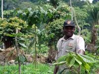 Original Beans: Klimapositive Schokolade schützt Umwelt