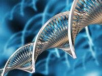 Aus körpereigenen Zellen den Krebs besiegen!
